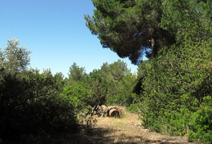 finca-for-sale-in-can-germa-ibiza_8