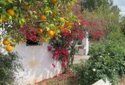 Traditional finca requiring renovation for sale in Santa Eularia_1