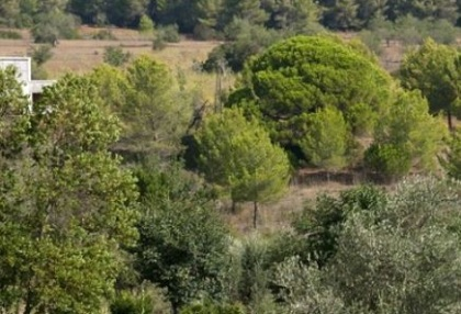 Two hundred year old finca project for sale in Santa Eulalia, Ibiza_2
