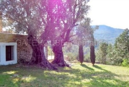 Rustic finca with panormaic views for sale close to San Juan_1