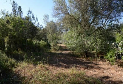 country house with potential for renovation in Santa Eularia_7