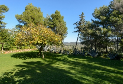 Large traditional Ibiza finca with guesthouse pool vineyard 41