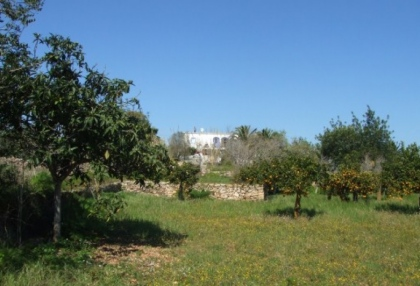mansion-for-sale-san-lorenzo-ibiza-in-need-of-renovation-on-large-plot-3