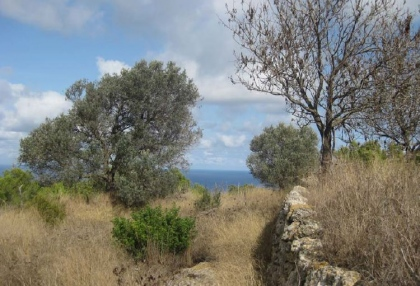 finca-ruin-for-sale-san-juan-ibiza-building-project-12